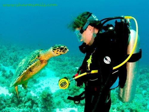 Introductory Scuba Diving in the Red Sea